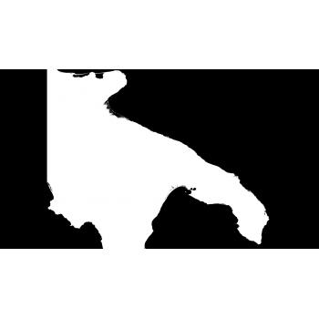 DSM Puglia - Modello...
